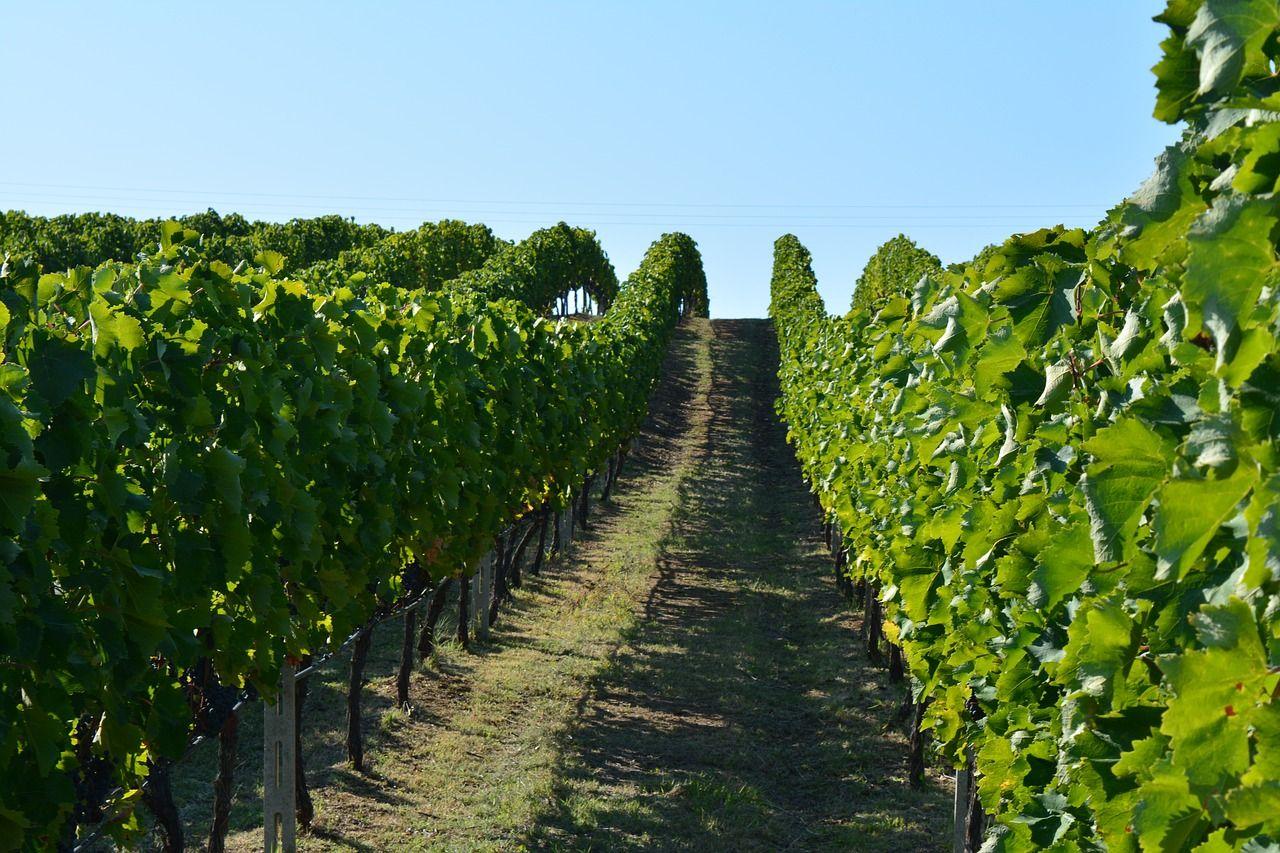 Tradizione vitivinicola di Nemea Tour Grecia Classica